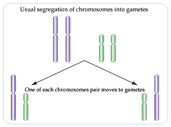 Usual segregation of chromosomes into gametes